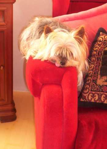La mascotte de La Coinche St?phanoise MOUSTIQUE vous invite ? vous reposer pour pr?parer UNE ANNEE 2011  PLEINE DE SUCCES